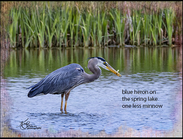 'bue heron on / the spring lake / one less minnow' by Kim Sosin