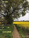 'the miles separating us / mustard fields'  by Mamta Madhavan. Art by Mini Unikrishnan