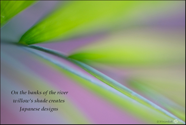 'on the banks of the river / willow's shade creates / Japanese designs' by Urszula Winnarska. Art by Raul Canto