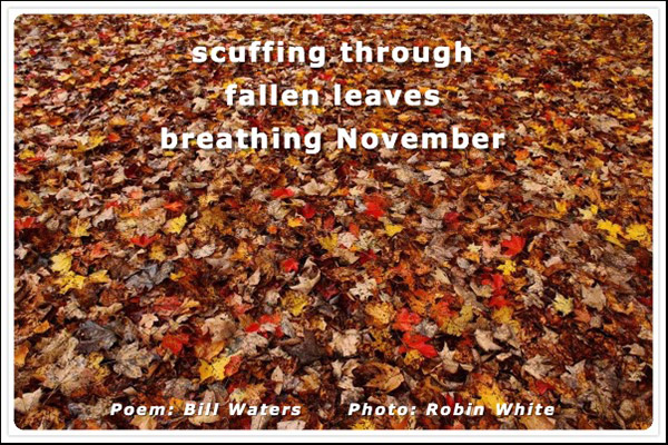 'scuffing through / fallen leaves / breathing November' by Bill Waters. Art by Robin White