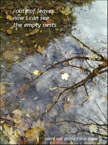 'route of leaves / now I can see / the empty nests' by Oscar Luparia