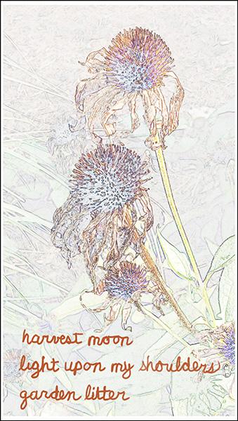 'harvest moon / light upon my shoulders / garden litter' by Albert Schepers