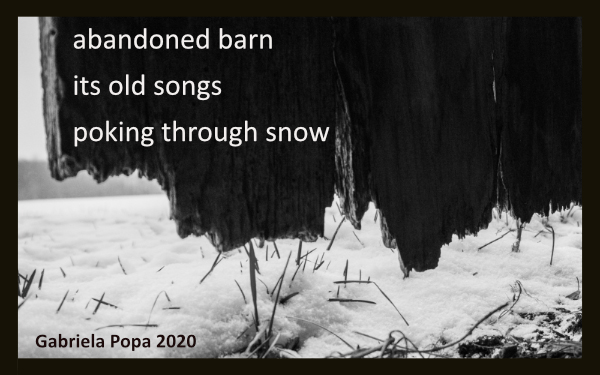 'abandoned barn / its old songs / poking through snow' by Gabriela Popa