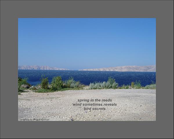 'spring in the reeds / wind sometimes reveals / bird secrets' by Wieslaw Karlinski