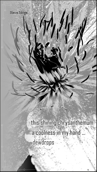 'the shining chrysanthemum / a coolness in my hand... / dewdrops' by Slawa Sibiga
