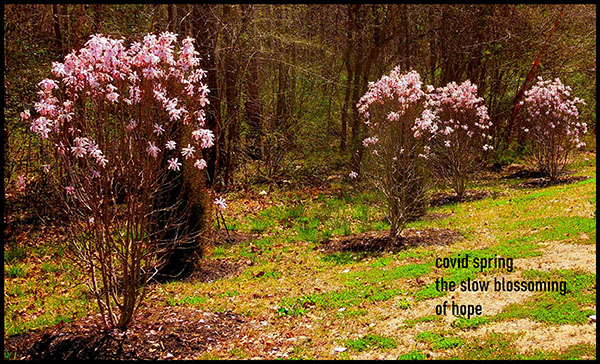 'covid spring / the slow blossoming / of hope' by Ed Bremson