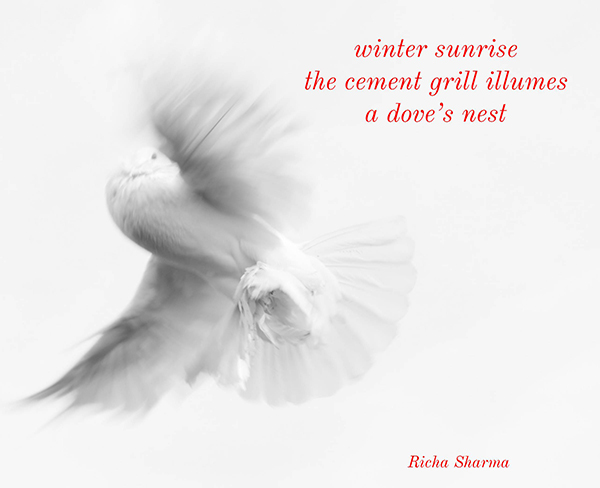'winter sunrise / the cement grill illumines / a dove's nest' by Richa Sharma.  Haiku first published in Wales Haiku Journal Winter, January 2020