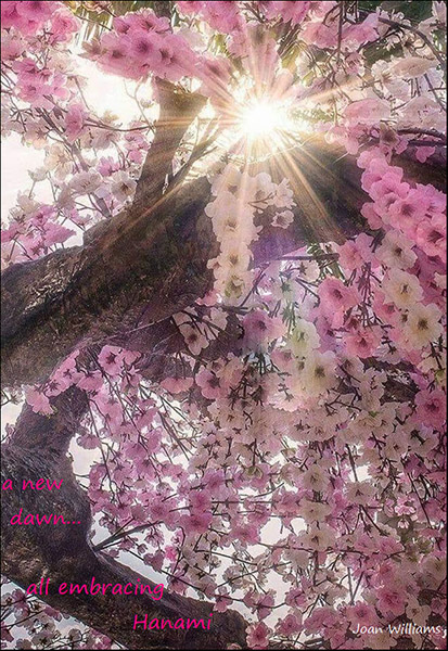 """a new dawn... / all embracing / Hanami' by Joan Williams"
