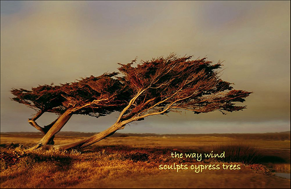 """'the way wind / sculpts cypress trees"""" by Dan Campbell"""