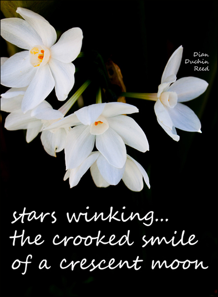 'stars winking... / the crooked smile / of a crescent moon' by Dian Reed