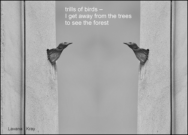 'trills of birds— / I get away from the trees / to see the forest' by Lavana Kray