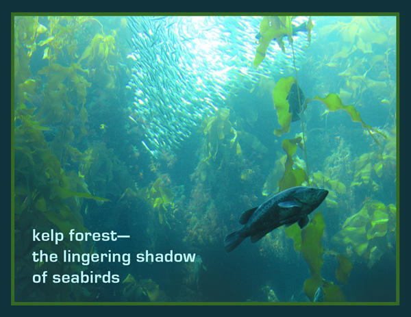 'kelp forest— / the lingering shadow / of seabirds' by Nicole Pakan.