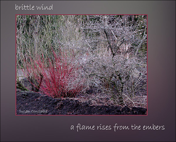 'brittle wind / a flame rises from the embers' by Susan Constable.