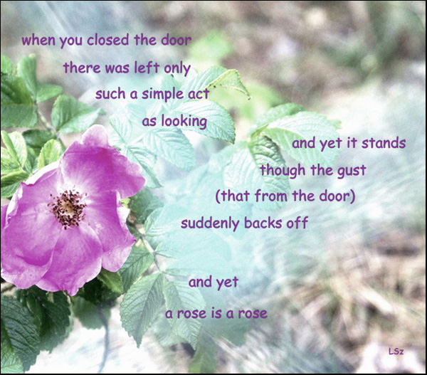 'when you closed the door / there was left only / such a simple act as looking / and yet it stands / though the gust / (that from the door) / suddenly backs off / and yet / a rose is a rose' by Leszek Szeglowski