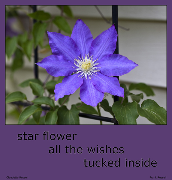 'star flower  / all the wishes / tucked inside' by Claudette Russell. Art by Frank Russell.