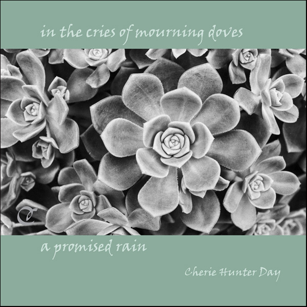 'in the cries of mourning doves / a promised rain' by Cherie Hunter Day