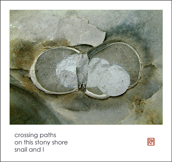 'crossing paths / on this stony shore / snail and I' by Ruth Mittleholtz.