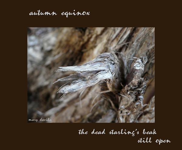 'autumn equinox / the dead starling's beak / still open' by Mary Davila.