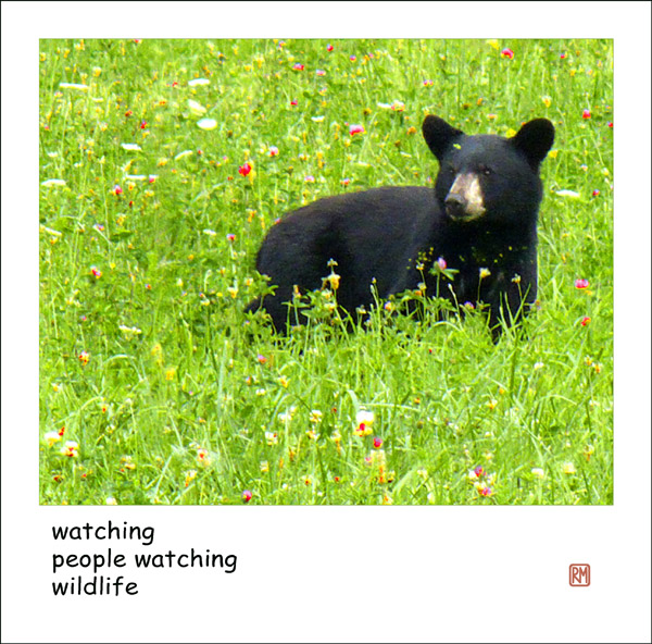'watching / people watching / wildlife' by Ruth Mittelholtz