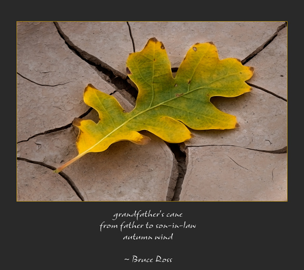 'grandfather's cane / from father to son-in-law / autumn wind' by Ray Rasmussen. Haiku by Bruce Ross was 2nd place in the 16th Annual Robert Frost Poetry Festival Haiku Contest, April 11, 2010 and was reprinted in The Saturday Evening Post, (September-Oct