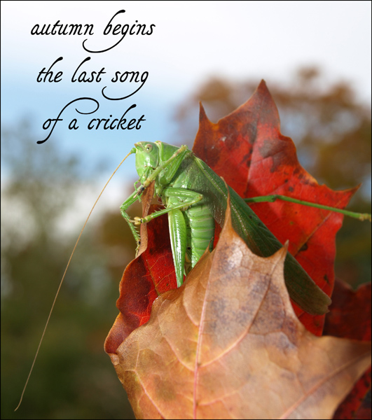 """autumn begins / the last song / of a cricket' by Jacek Margolak."
