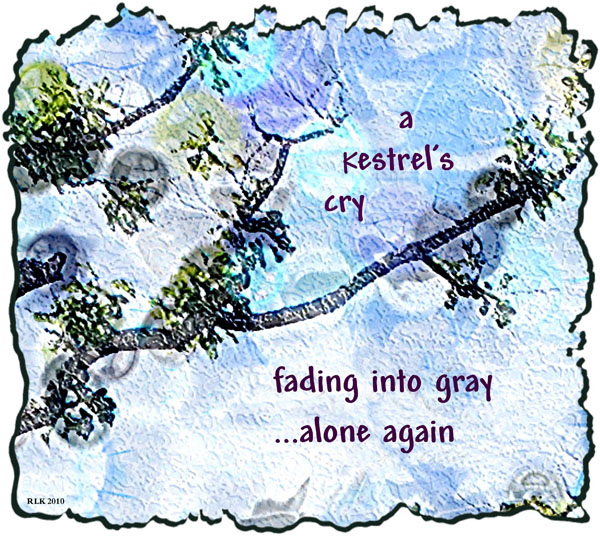 'a kestrel's cry / fading into gray / ...alone again' by Ronald Kirkland