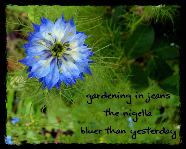 'gardening in jeans / the nigella / bluer than yesterday' by Violette Rose Jones