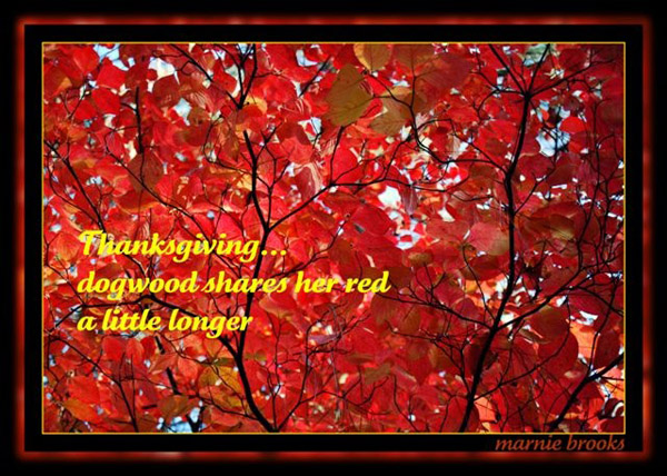 'Thanksgiving / dogwood shares her red / a little longer' by Marnie Brooks