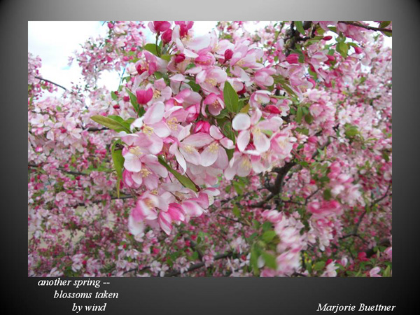 'another spring� / blossoms taken / by wind' by Marjorie Buettner