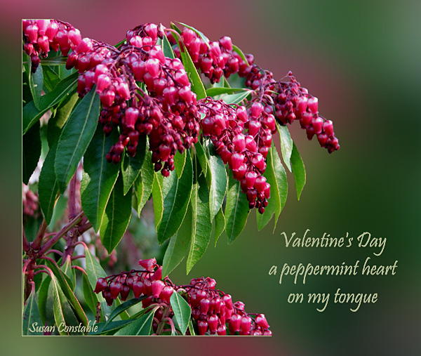 'Valentine's Day / a peppermint heart / on my tongue' by Susan Constable