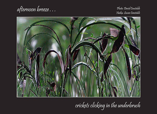'afternoon breeze... / crickets clinking in the underbrush' by Susan Constable. Art by David Constable
