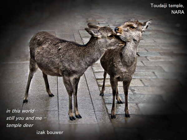 'in the world / still you and me� / temple deer' by Izak Bouwer. Art by Susan Thomas and Glenn Mason.