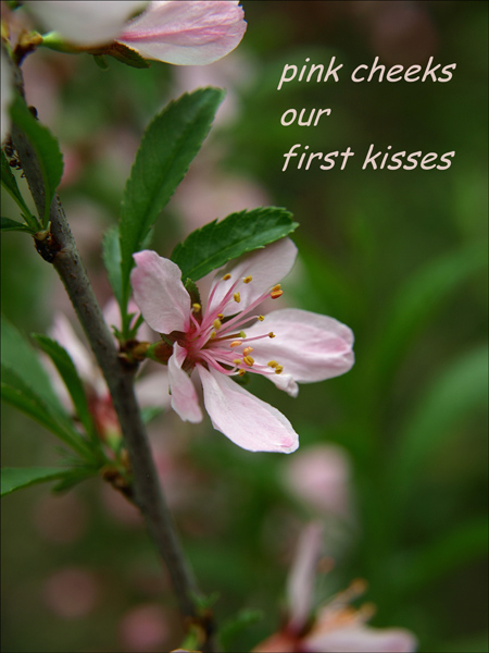 'pink cheeks / our / first kisses' by Urszula Wielanowska