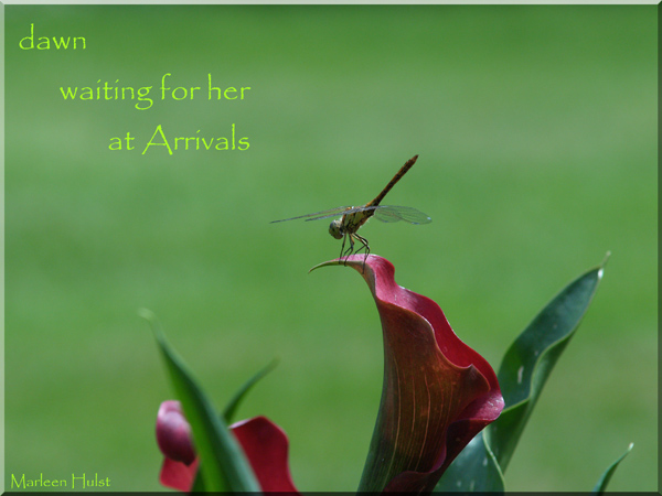'dawn / waiting for her / at Arrivals' by Marlene Hulst. Haiku first published in Shiki Monthly Kukai, Jan. 2011