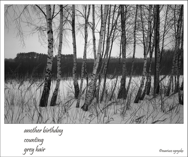 'another birthday / counting / grey hair' by Mariusz Ogryzko