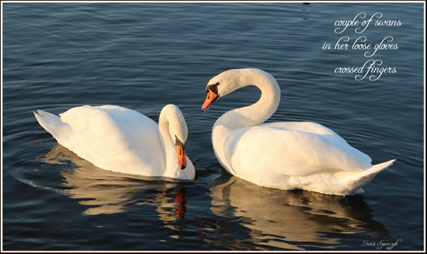 'couple of swans / in her loose gloves / crossed fingers' by Irena Szewczyk