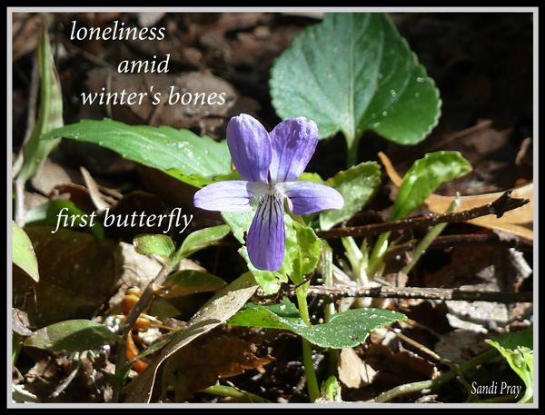 'loneliness / amid winter's bones / first butterfly' by Sandi Pray