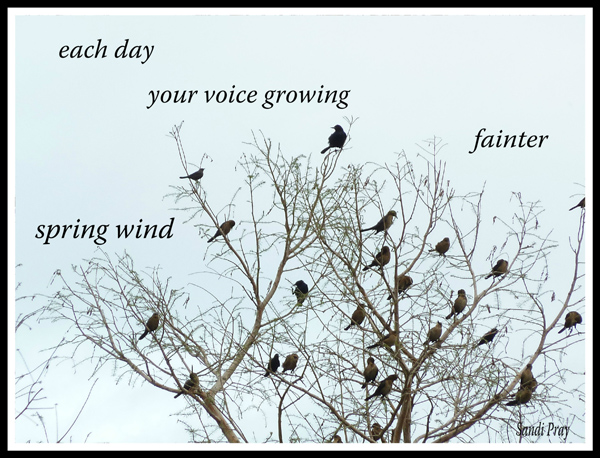 'each day / your voice growing  / fainter / spring wind' by Sandi Pray