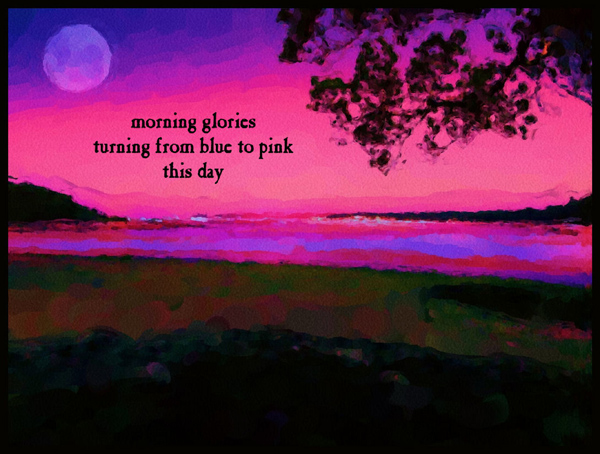 'morning glories / turning from blue to pink / this day' by Violette Rose-Jones