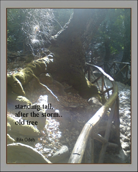 'standing tall / after the storm / old tree' by Rita Odeh