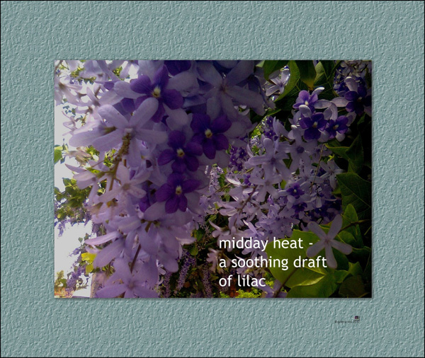 'midday heat� / a soothing draft / of lilac' by Gillena Cox