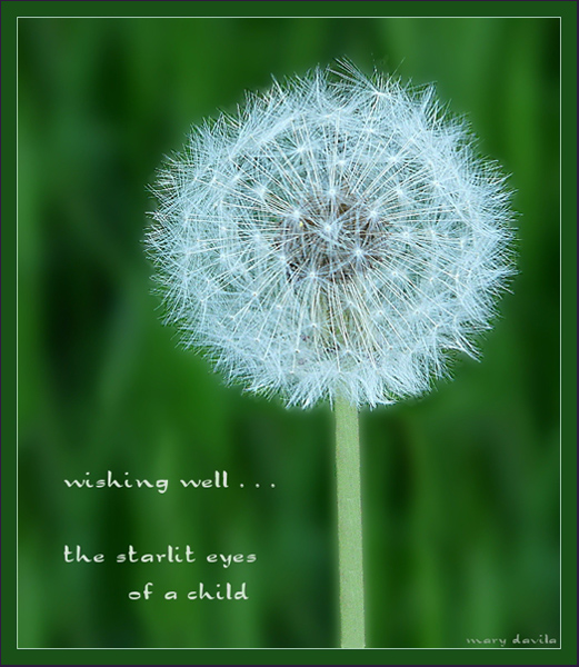 'wishing well... / the starlit eyes / of a child' by Mary Davila