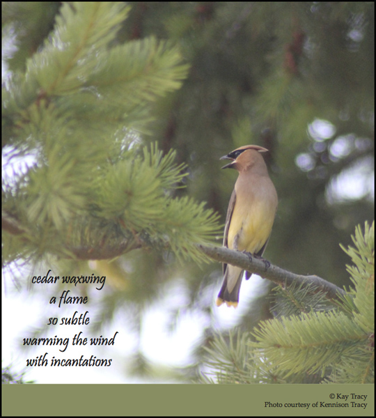 'cedar waxwing / a flame / so subtle / warming the wind / with incantations' by Kay Tracy. Art by Kennison Tracy