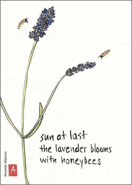 'sun at last / the lavender blooms / with honeybees' by Annette Makino