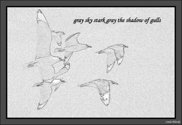 'gray sky stark gray the shadow of gulls' by Linda Pilarski