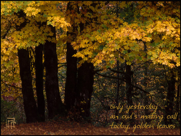 'only yesterday / an owls mating call / today, golden leaves' by Ray Rasmussen