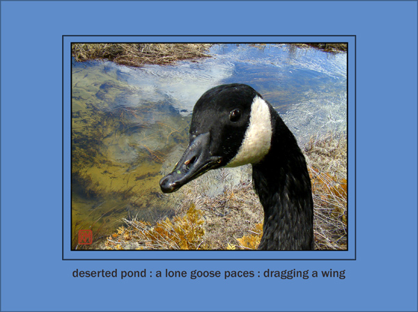 'deserted pond: / a lone goose paces ; / dragging a wing' by Ruth Mittelholtz