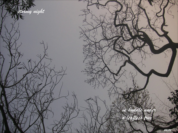 'stormy night / we huddle under / a leafless tree' by Mamta Madhavan