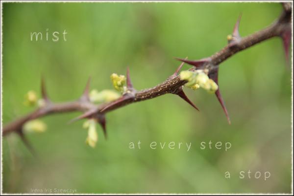 'mist / at every step / a stop' by Irena Szewczyk