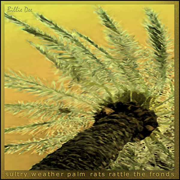'sultry weather palm rats rattle the fronds' by Billie Dee. The haiku was published in Rattle of Bamboo, the Southern California Haiku Study Group Anthology, 2007
